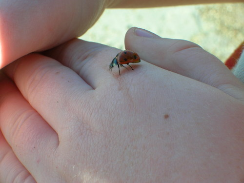 Ladybug along the Great Salt Lake