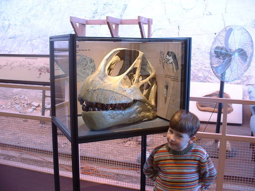Liam and a Brachiosaurus skull