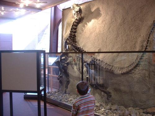 Barosaurus skeleton